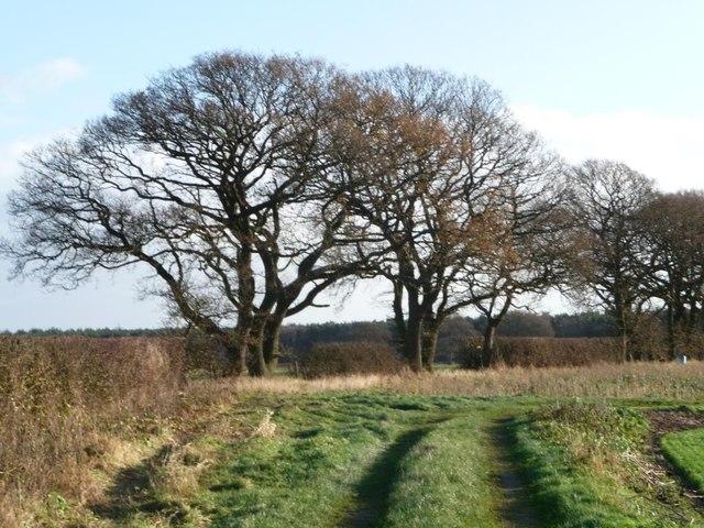 Winter trees along Ewe Hole Lane