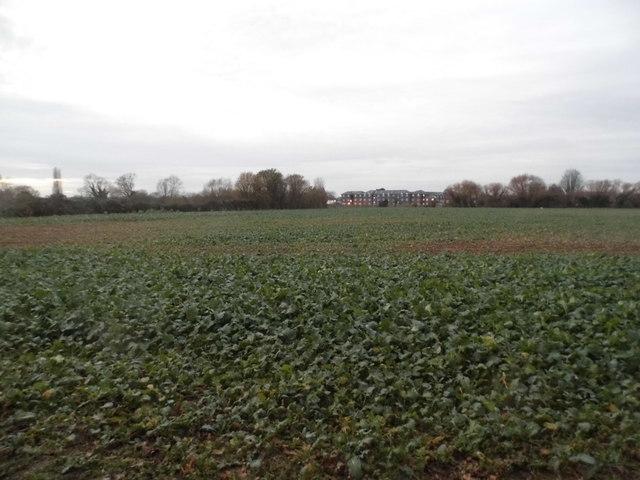 Field behind Chertsey Lane, Egham
