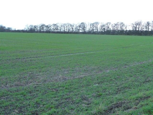 Thin strip of woodland, Burton Moor