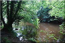 SE3358 : River Nidd by N Chadwick
