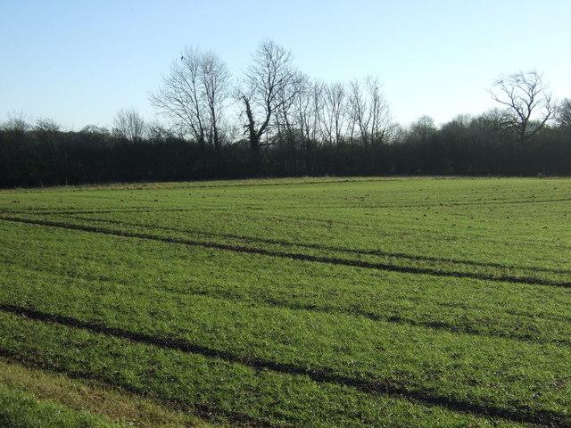 Farmland, Pick Hills