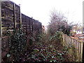 ST3090 : Overgrown area between Yewberry Lane and Grove Park Drive, Newport  by Jaggery