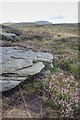SD7676 : Gritstone Rock Outcrop by Mick Garratt