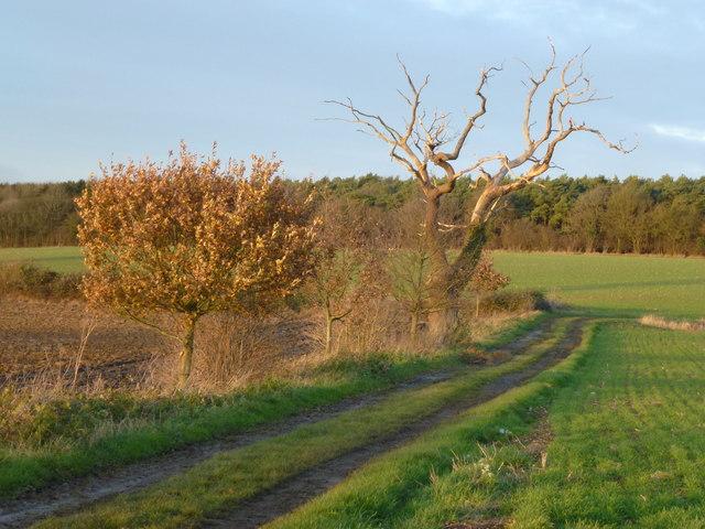 Farmland and track near Little Saxham, Suffolk