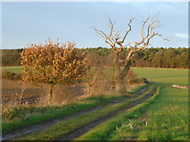 TL8063 : Farmland and track near Little Saxham, Suffolk by Richard Humphrey