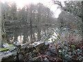 SE0718 : Mill Pond - off Dog Lane by Betty Longbottom