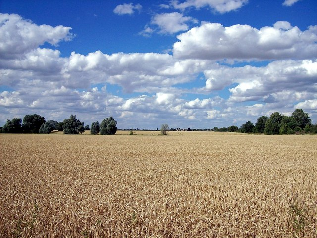 Awaiting the combine near Bourne, Lincolnshire