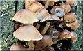 J3977 : Fungi, Redburn Country Park, Holywood - December 2014(7) by Albert Bridge