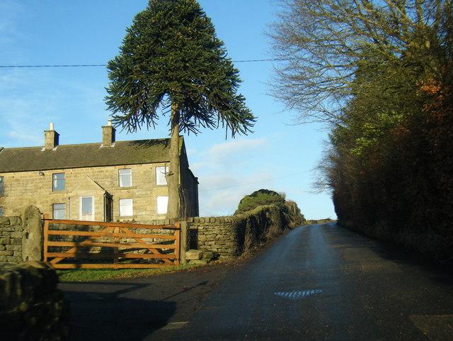 B5057 by Sydnopehill Farm