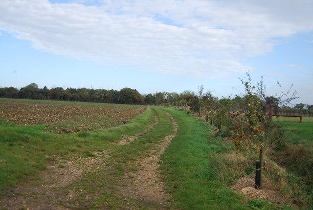 Bridleway from Runhall Fruit Farm