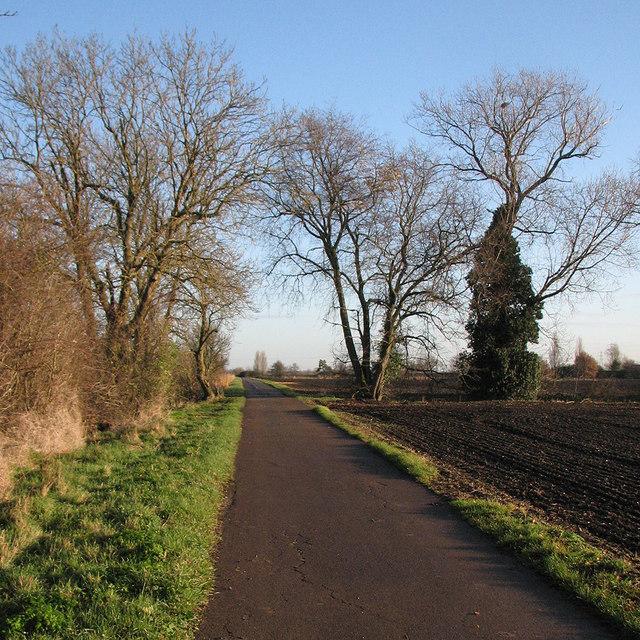 Winter trees near Slades Farm