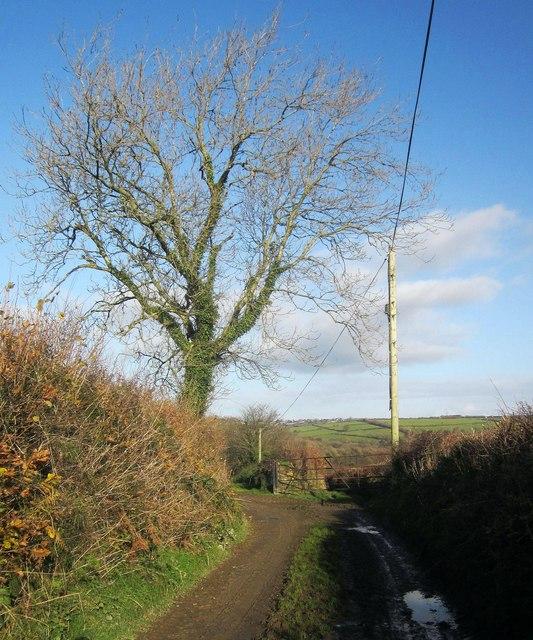 Green lane north of Butterdon Farm