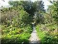 NJ0259 : Hogweed infested woodland by Richard Webb