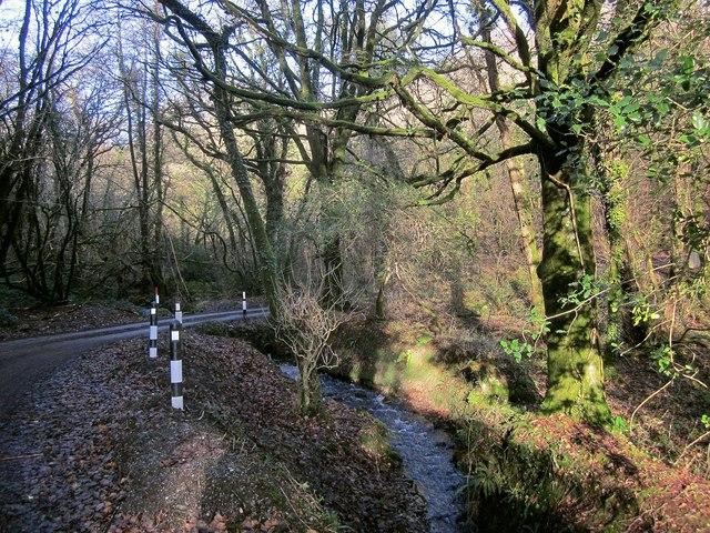 Stream and lane, Skelton's Wood