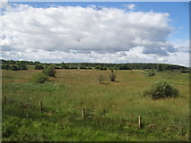 M7667 : Grassland and a few bushes by Ian Paterson