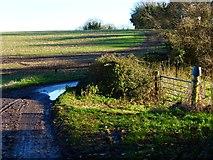SU6514 : Field seen from sharp bend on Pitt Hill Lane by Shazz
