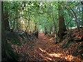 TQ3023 : Bridleway, Furnace Wood by Simon Carey