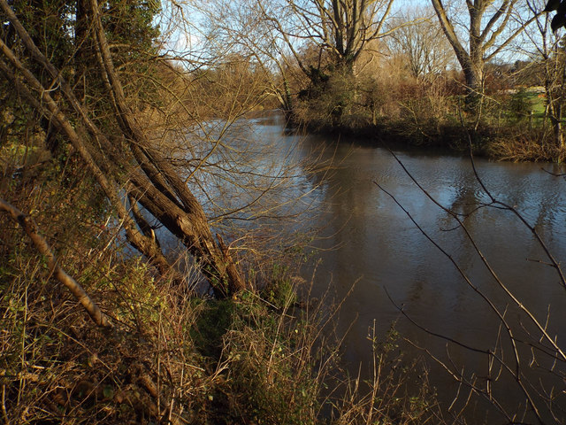 Leaning willows, River Avon by Emscote Gardens, Warwick 2014, December 19