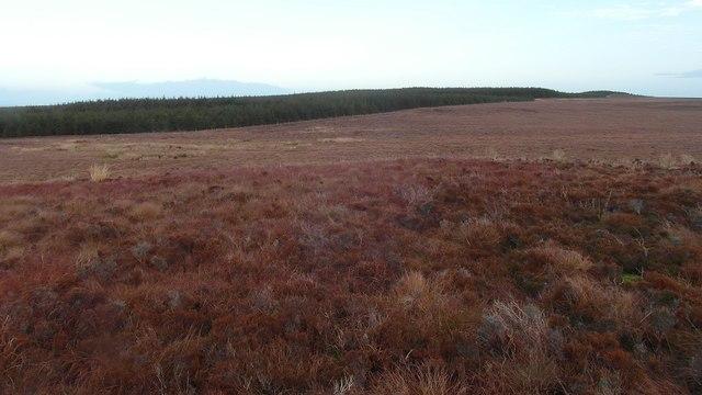 Blingery forest boundary
