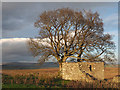 NY9717 : Trees and ruined building at East Loups's by Trevor Littlewood