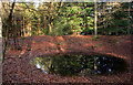 SU5171 : Small Pond in Fence Wood by Des Blenkinsopp