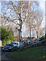 SP3079 : Silver birches, Brookside Avenue by E Gammie