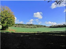 TQ8554 : On North Downs Way - View towards Salisbury Wood near Hollingbourne by Colin Park