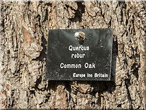 TQ3095 : Information Plaque on Oak Tree, Oakwood Park, London N14 by Christine Matthews