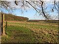 TL4538 : Chrishall: towards Park Wood by John Sutton