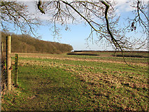 TL4538 : Chrishall: towards Park Wood by John Sutton