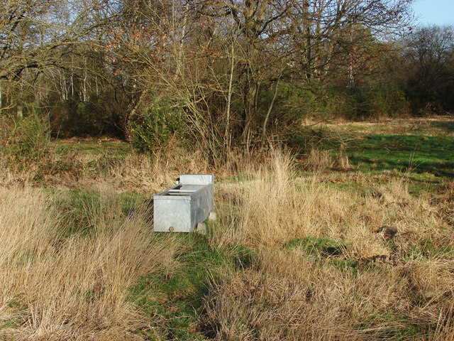 Water trough, Bisley Common
