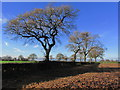 SJ8158 : Autumn afternoon - View along field boundary, S of Higher Smallwood near Thurlwood by Colin Park