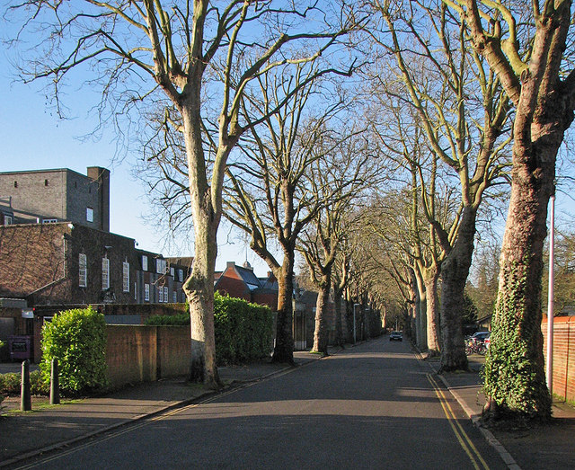 Sidgwick Avenue in December