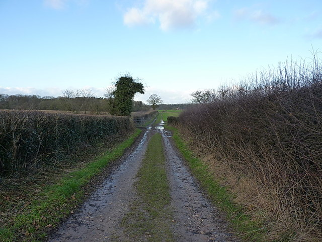 The bridleway to Shelmore