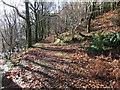 NY2332 : Path in Robin Hood's Wood by David Brown