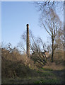 TL4659 : Trees and Chimney by Alan Murray-Rust