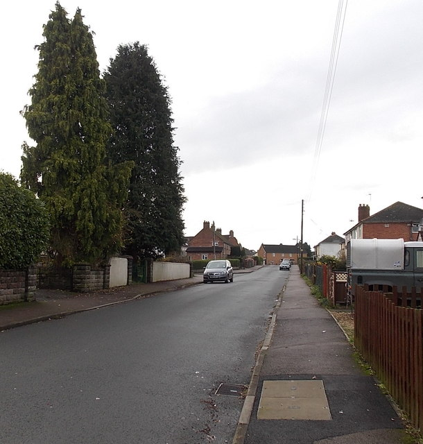 Chapel Road conifers in Berry Hill