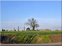 TL6829 : Tree in a field by Robin Webster