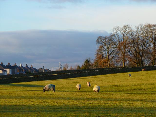 Pasture, Knock, Long Marton