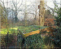 TQ2679 : Wildlife Garden, Natural History Museum, London by David Hallam-Jones