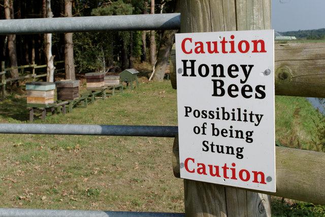 Caution - Honey Bees