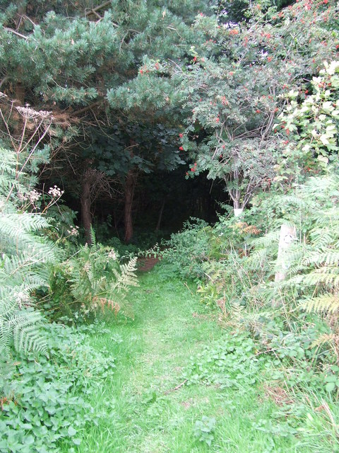 Entering Mill Covert