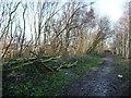 SE3227 : Maintenance on the railway embankment at Robin Hood by Christine Johnstone