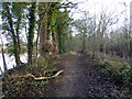 NZ0161 : Footpath by the River Tyne by Oliver Dixon