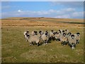 NY8640 : Pasture above Wearhead, Stanhope by Andrew Smith