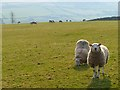 NY8739 : Pastures above Wearhead, Stanhope by Andrew Smith