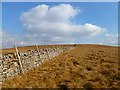 NY8741 : Moorland above Wearhead, Stanhope by Andrew Smith