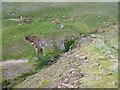 NY3135 : Mine Remains in Short Grain by Matthew Hatton