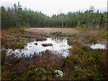 NH6860 : Tarn in the Millbuie Forest by Julian Paren