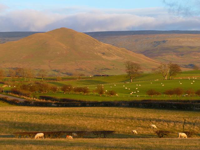 Pasture, Long Marton